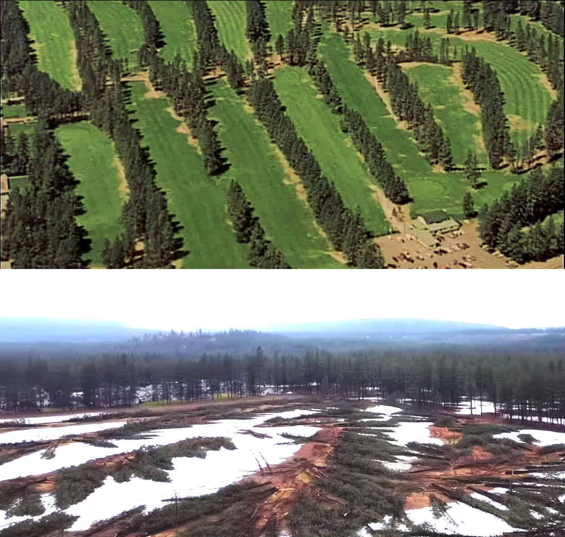 Before and after: Picture of the downed pine trees at the former Sundance Golf Course.